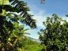 Bomen Cuba